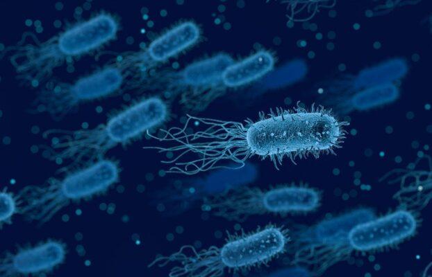 Mikrobiyolojiden Tarımsal Mikrobiyolojiye Genel Bir Bakış-2