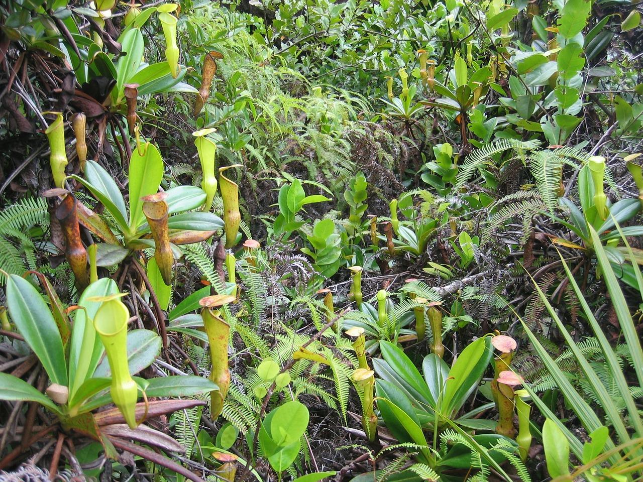 Bitkilerin Bilimsel Dünyası: Bitki, İnsanlar ve Biyoloji